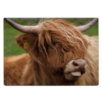 Highland Cow Alu Print DM_03_CP
